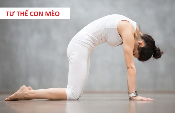 yoga tu the con meo